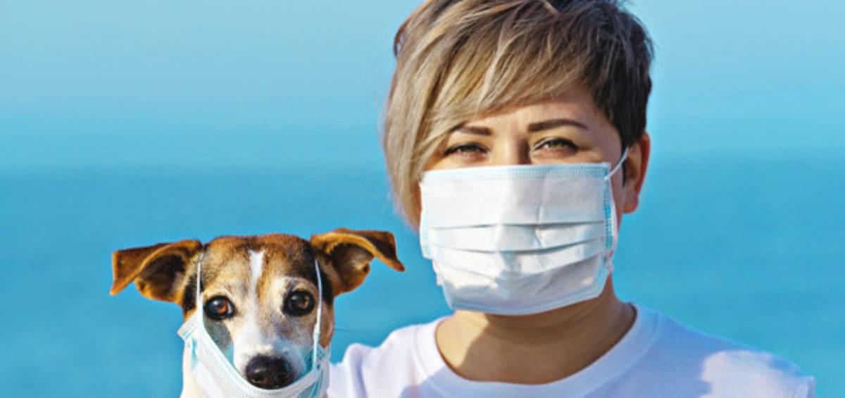 animali domestici coronavirus