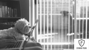 Smartworking pet