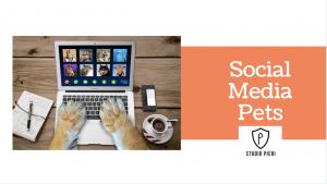 social media pet